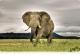 Бессардэчны слон
