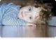 Змёртвыхпаўсталы Хрыстус – у дамах хворых дзяцей