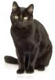 Куды вядзе чорны кот?