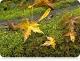 Ружанцовы кастрычнік